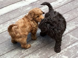 Puppies toe to tail